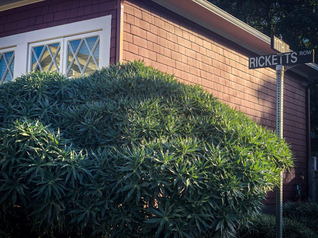 John Steinbeck Family Cottage